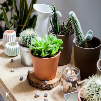 Cactus, suculentas y Tillandsias: las plantas perfectas para interiores