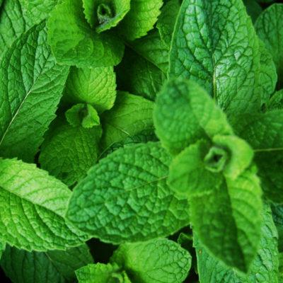Cuida de tus plantas ecológicamente